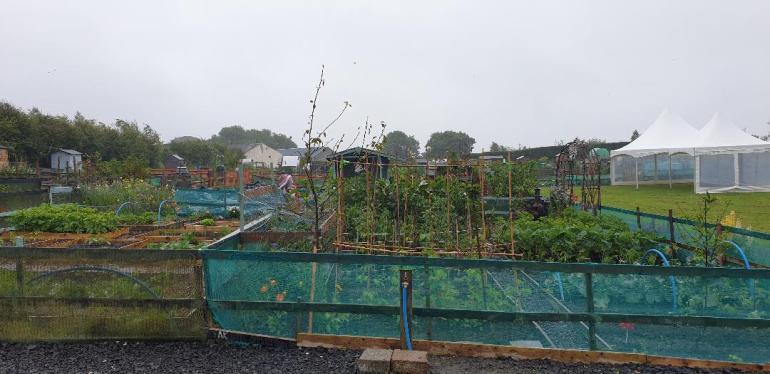 Little Green Gardens 1